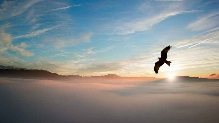 silhouette of bird above clouds