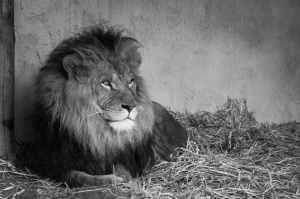black and white animal boss zoo